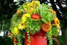 GARDEN~  succulents / by Tammie Jackett