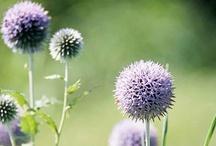Jardiniere / by Lindsay Brillson