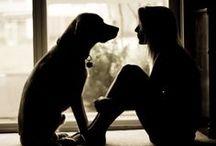 The best friend - DOG