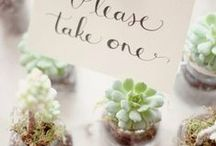 Wedding favors / Eco-friendly wedding favors and gifts for a sustainable wedding