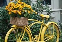 Bikes / by Linda @ Seaside Style