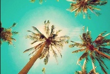 Palm Trees / by Linda @ Seaside Style