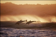 Dolphins / by Linda @ Seaside Style