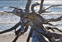 Driftwood / by Linda @ Seaside Style