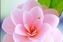 flowers / by Linda @ Seaside Style