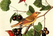 Botanicals / All about Botanical prints ~ / by Bobbie Moran