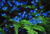 BLUE SHADES / by Maria