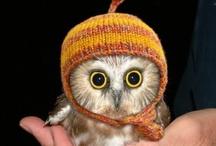 owls / by Leslie Sowash