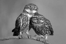 Birds for Mom / Beautiful birds and baby animals that my mom would love. / by Jennifer G