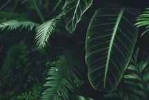 // Jungle // / Images of rainforest scenes and life. Photos, art, illustrations. Weddings and engagement sessions in the rainforest.