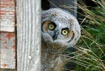 Owlove it.  / by Yara Elizabeth Brighton