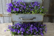 Gardening & Outdoors / by Kimberly Moore