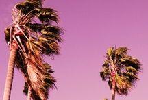 California Holiday Planning