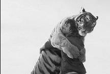 Animals : RANDOM