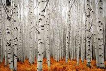 Trees / . / by Linda Swoboda