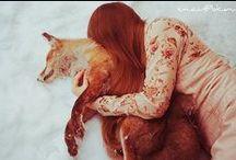 Animals : FOX