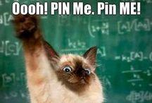 Humor [Cats]