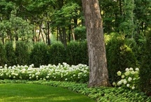 Gardens / by Christine Goodwin