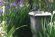 gardens / by cindy sachdeva