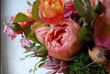 flowers / by cindy sachdeva