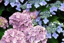 for the garden / by Kristen Thomas