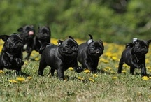 Dogs / by Joseph Piper