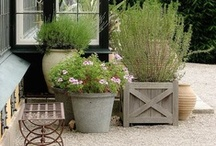 container gardening / by cindy sachdeva