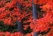 Vermont / by Maryjo Medley