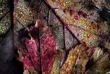 Autumn's Beautiful Shades / colors of fall / by Betty Sneeringer
