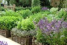 garden ideas / by Cheri Piles