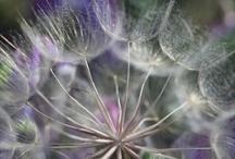 art / dandelion art