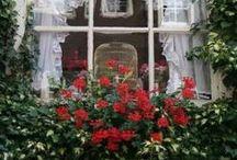 Window Boxes / by Pat Leatherman