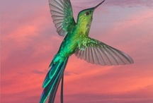 Birds / by Mary Vileta