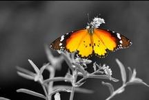 Butterflies / by Mary Vileta