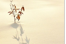 fuyu (winter)