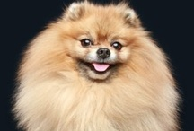 STITCH our Pomeranian / by Katt Bailey