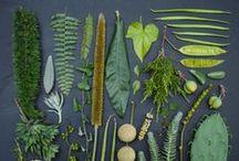_Herbarium