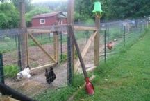 Gardening and Coops / Ideas for the garden, yard and chicken house