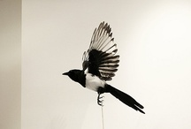 Magpie tattoo ideas