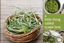 CSA-Garlic Scapes and Garlic