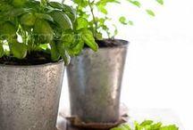 herbs, natural healing / by Edina Horváth