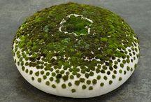 Moss! / Moss / by Ann Ayers