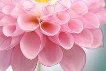 chaque fleur une beauté unique