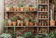 // HOUSEPLANT FRENZY // / Plants