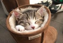 Animals: Cats Sleep Funny / the hundreds of hilarious sleeping positions of cats / by Shelly Lickliter