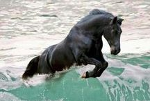 Animals: Horses of Courses / the glory, beauty, and strength of horses caught in pictures