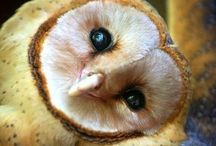 ~~ OwL ObSeSSiOn  ~~ / I am in love with this beautiful bird