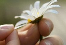 Daisies / Simple. Elegant. Beautiful. Pure. Don't you think daisies are the friendliest flowers? / by Erin Curran
