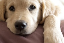 Puppies / Dog breeds, photos, quotes, and info