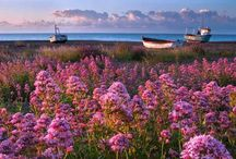 : S U F F O L K : / Things to do, places to see, in Suffolk / by Sarah G